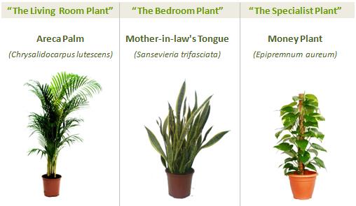 greenspaces_three_plants